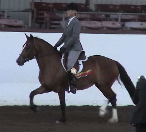 Goldhills Bit O Honey - Section D Welsh mare