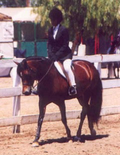 Goldhills Diamond Lil - Section B Welsh Mare