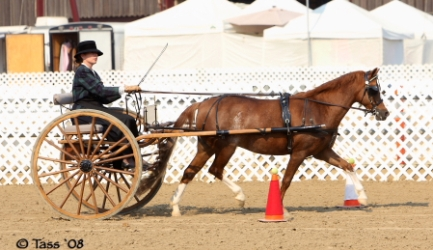 Goldhills Mystique LOM/AOE - section B Welsh mare