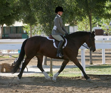 Goldhills Hanky Panky - National Champion Section D Mare