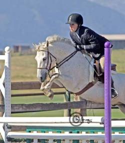 Goldhills Lone Star - Section B Welsh pony gelding aka Picture Perfect
